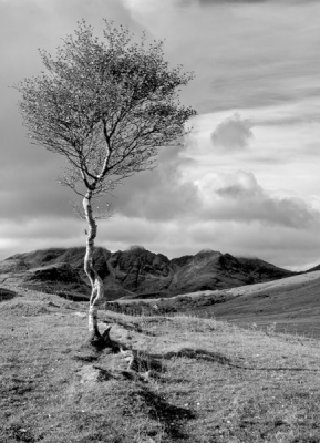 Lone Tree by Sue Hughes