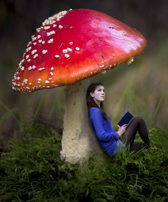 Under the Toadstool by Helena Jones