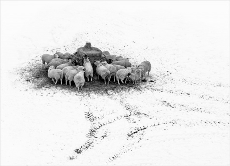 Winter Feed by Mike Fleet