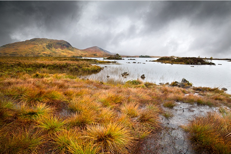 Autumn Grasses Rannoch Moor by Phil Thompson