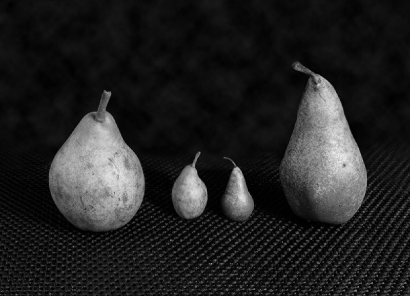 Pear Family (Family Group) by Keith Gordon