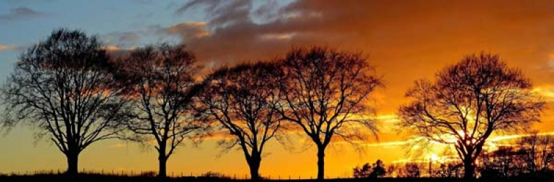 Trees_at_Sunset