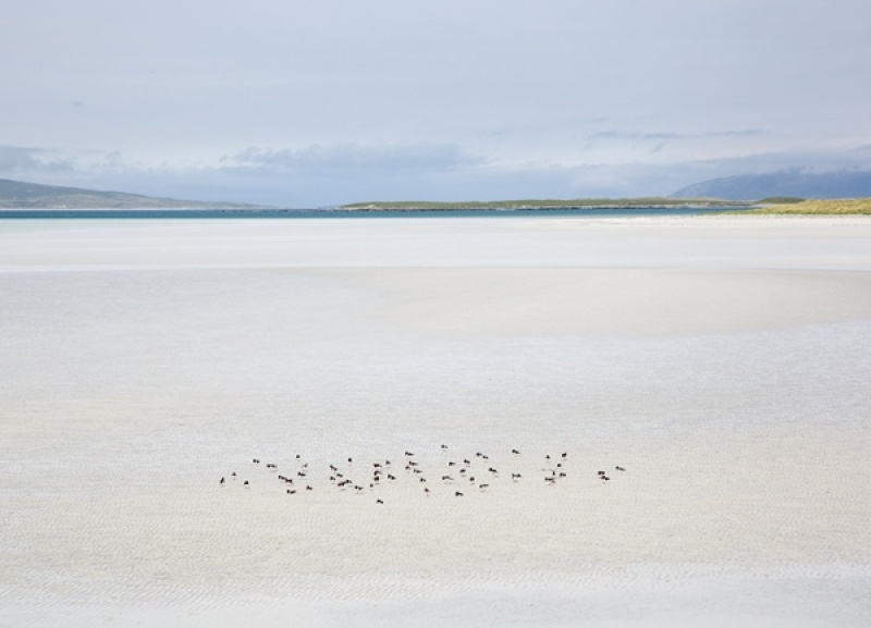 Hebridean Pastel with Feeding Oystercatchers by Keith Gordon