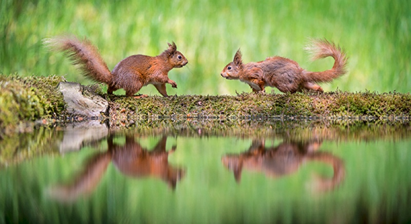 TWO SQUIRRELS by Cheryl Greenwood