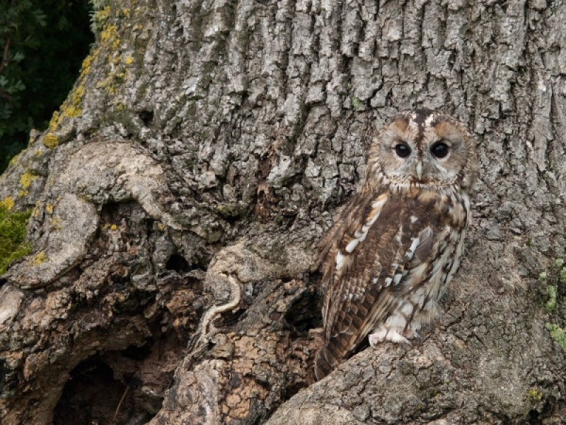 TAWNY CAMOUFLAGE by Diane Thurlow