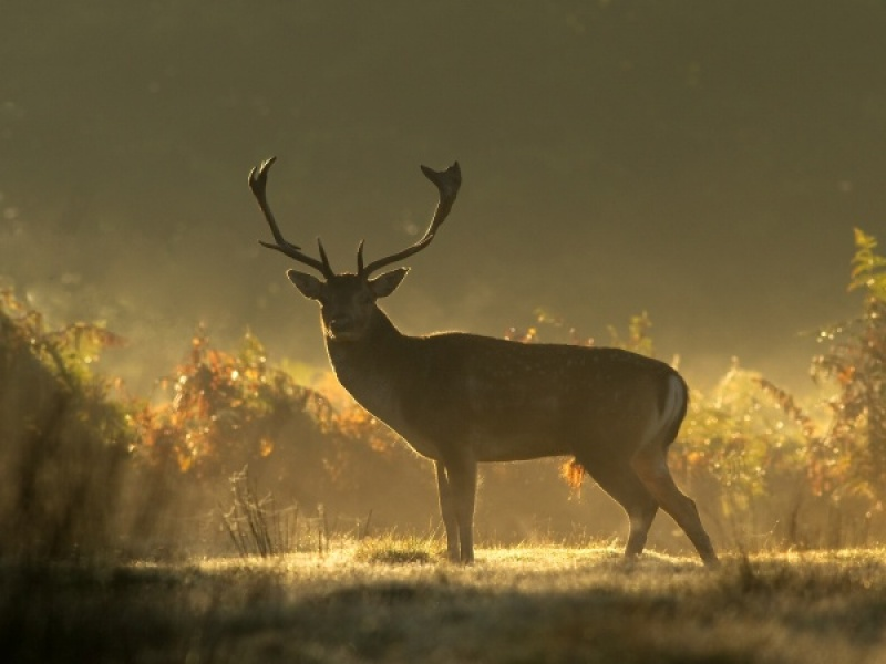 READY FOR THE RUT by Ken Lomas