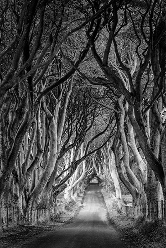 THE DARK HEDGES by Cheryl Greenwood 20A