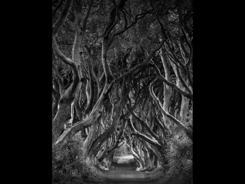 THE DARK HEDGES by Diane Thurlow
