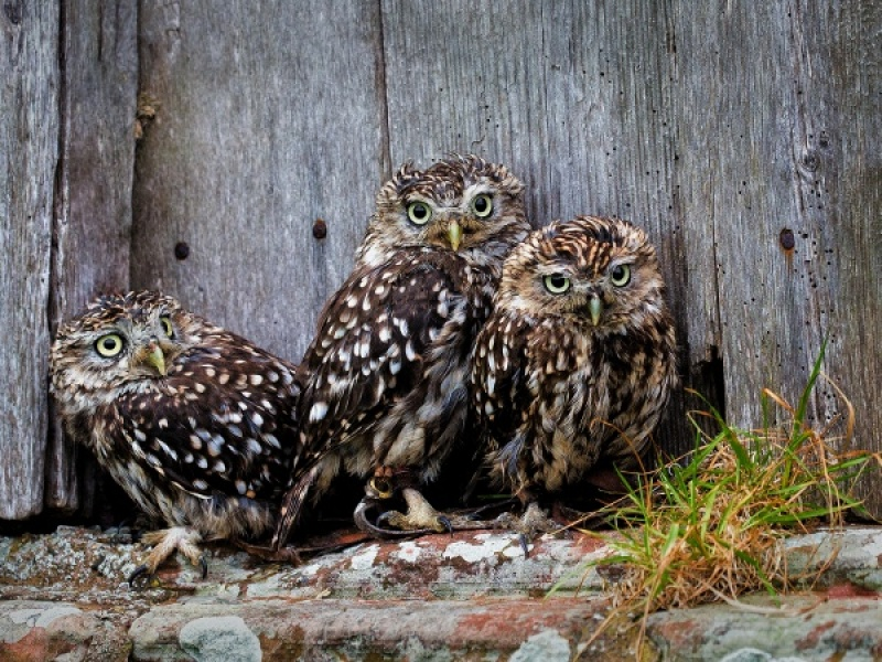 TRIO by Malcolm Blackburn