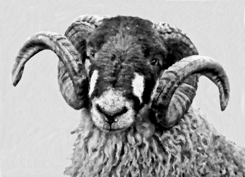 PORTRAIT OF A RAM by Pete Roberts