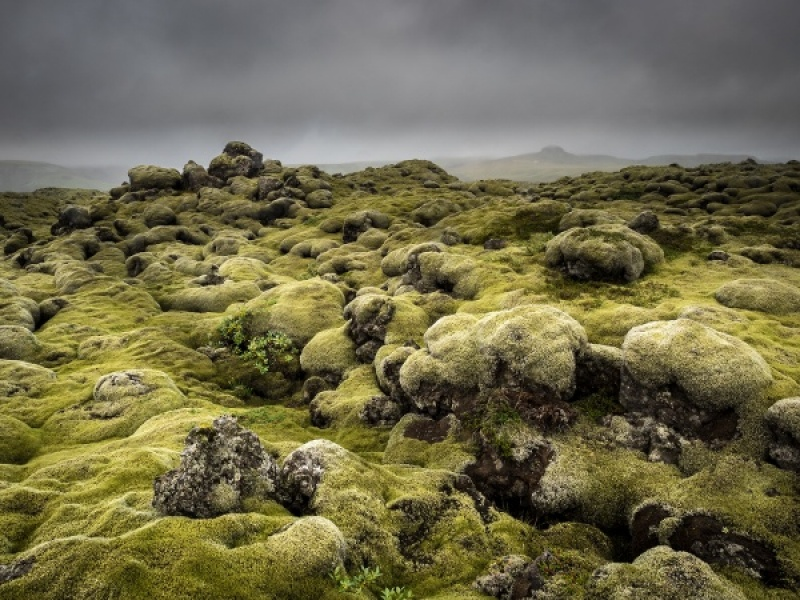 MOSS-COVERED LAVA FIELD, ICELAND by Diane Thurlow