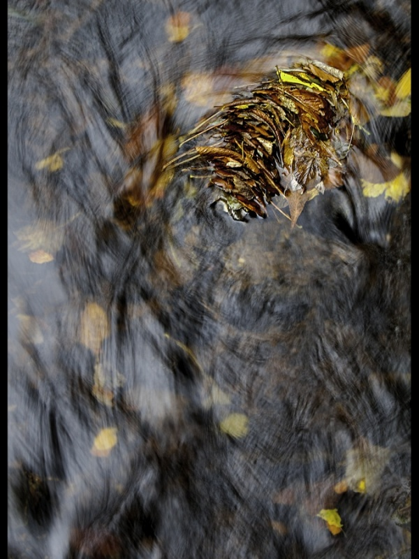 20151106  Autumnal Waters
