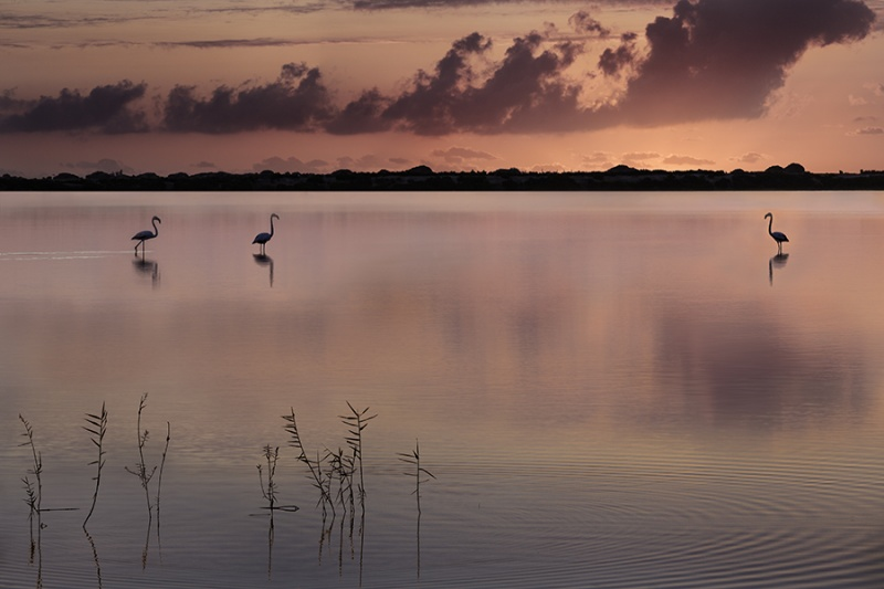FLAMINGO SUNRISE by Philip Thompson