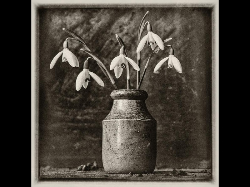 ANTIQUE SNOWDROPS by Helena Jones