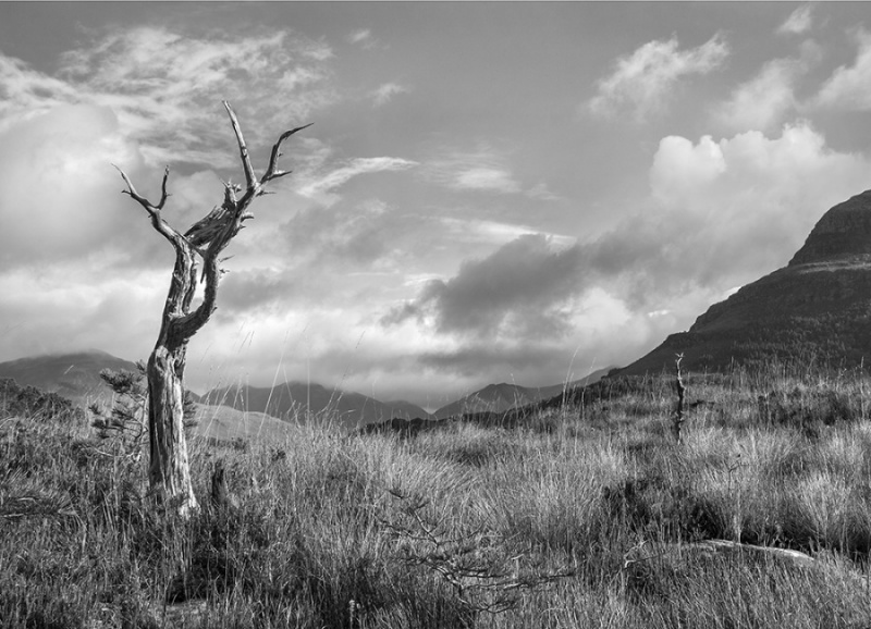 PHANTOM LANDSCAPE WITH TREES No1 by Keith Gordon