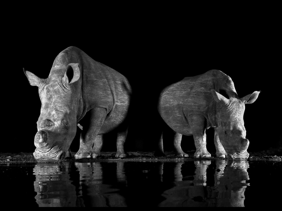 WHITE RHINOS 1 by Malcolm Blackburn