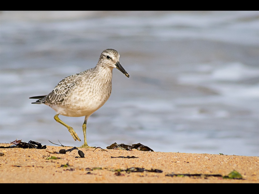 GREENSHANK by Dick Bateman