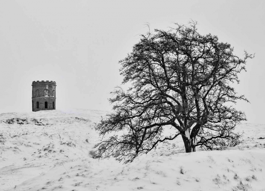 TEMPLE AND TREE by Caroline Claye