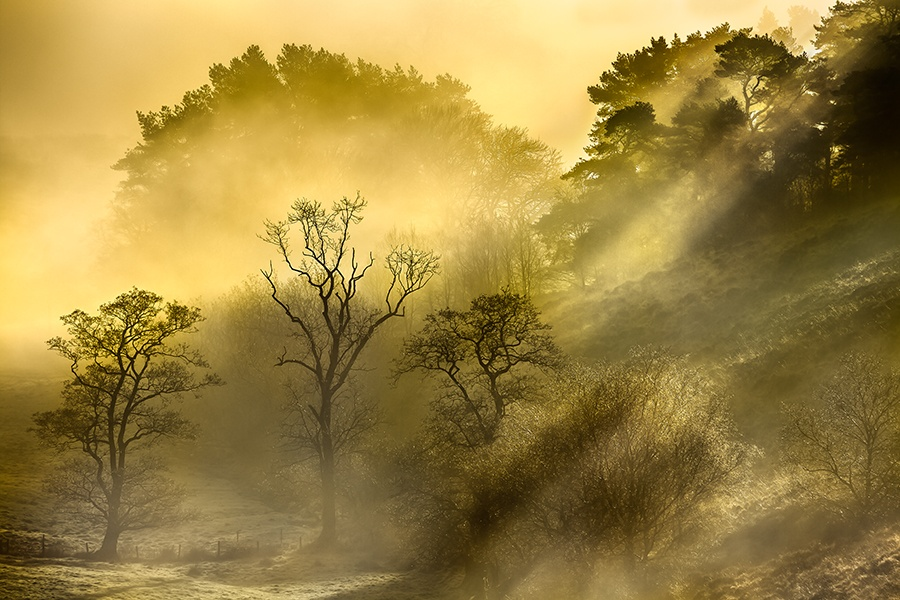 MOORLAND HIGHLIGHTS by Philip Thompson