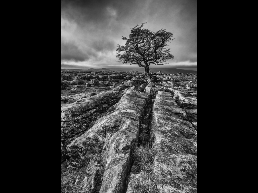 YORKSHIRE TREE by james chapman