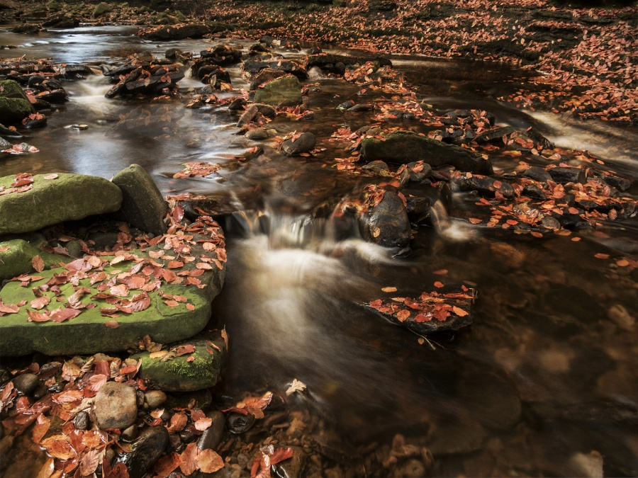 RIVER OF LEAVES by Annette Thomas