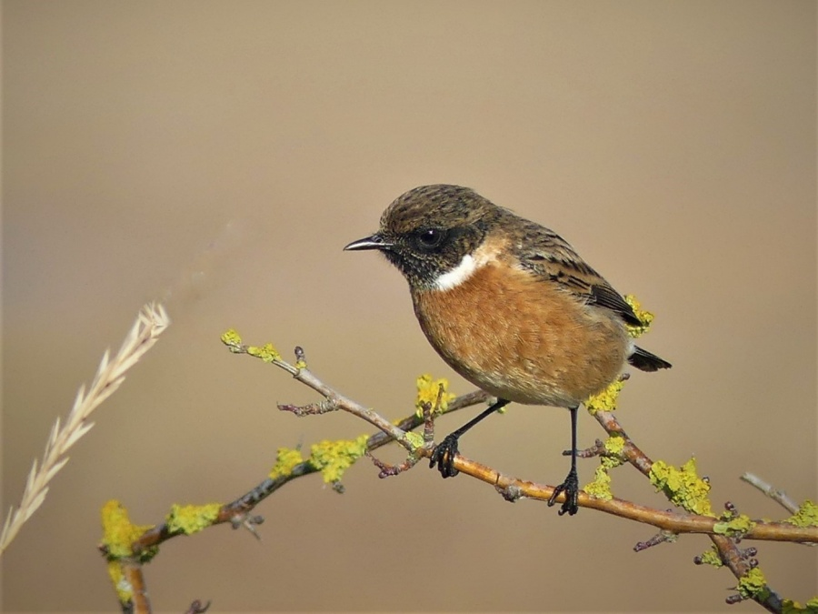 STONE CHAT by peter hill