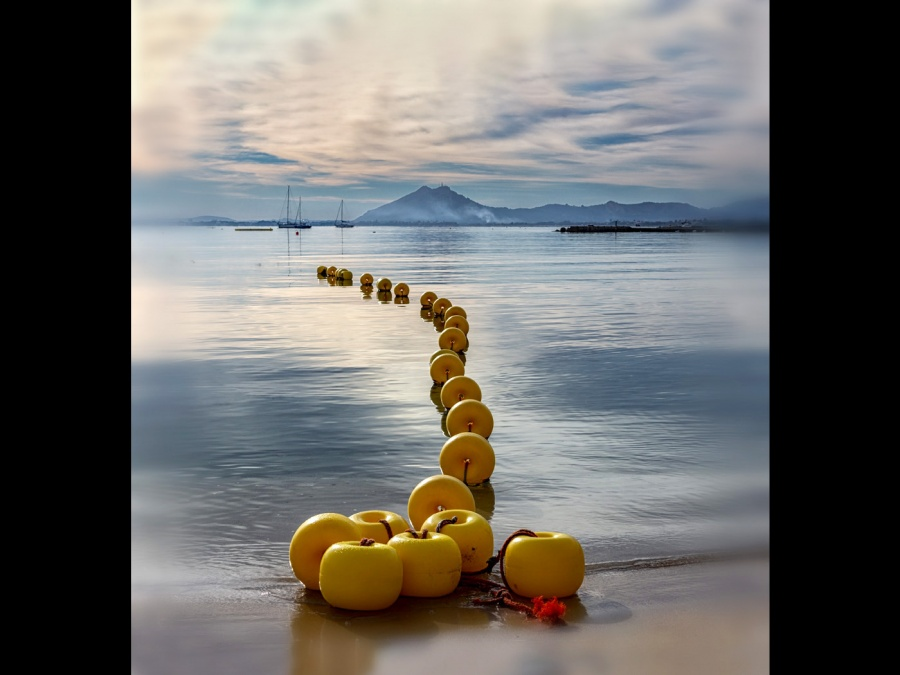 YELLOW FLOATS by Steve Claye