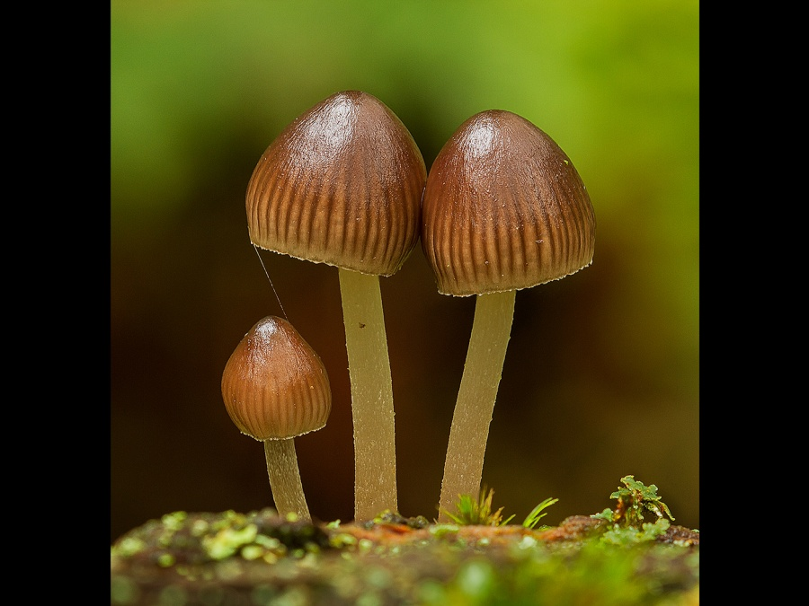 CLUSTERED BONNETS by Ken Lomas