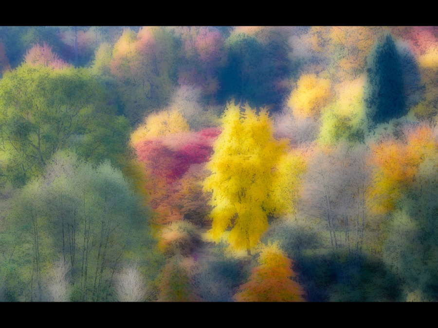 AUTUMN COLOURS by Dave Upcott