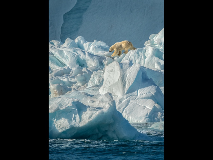 POLAR BEAR ON ICE by Cheryl Greenwood