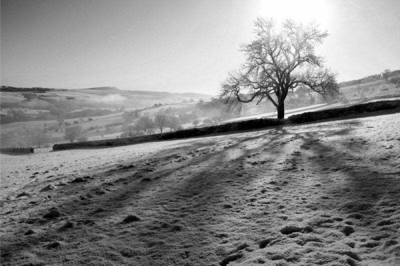 THE WINTER ASH by Howard Bristol