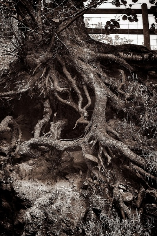 ROOTS by David Holme