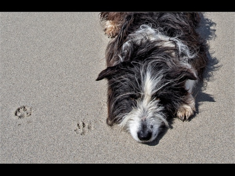 YES MY PAW PRINTS by Keith Gordon