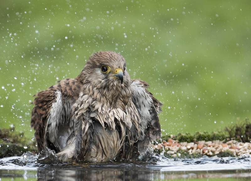 TAKING A BATH by Charlotte Nuttall
