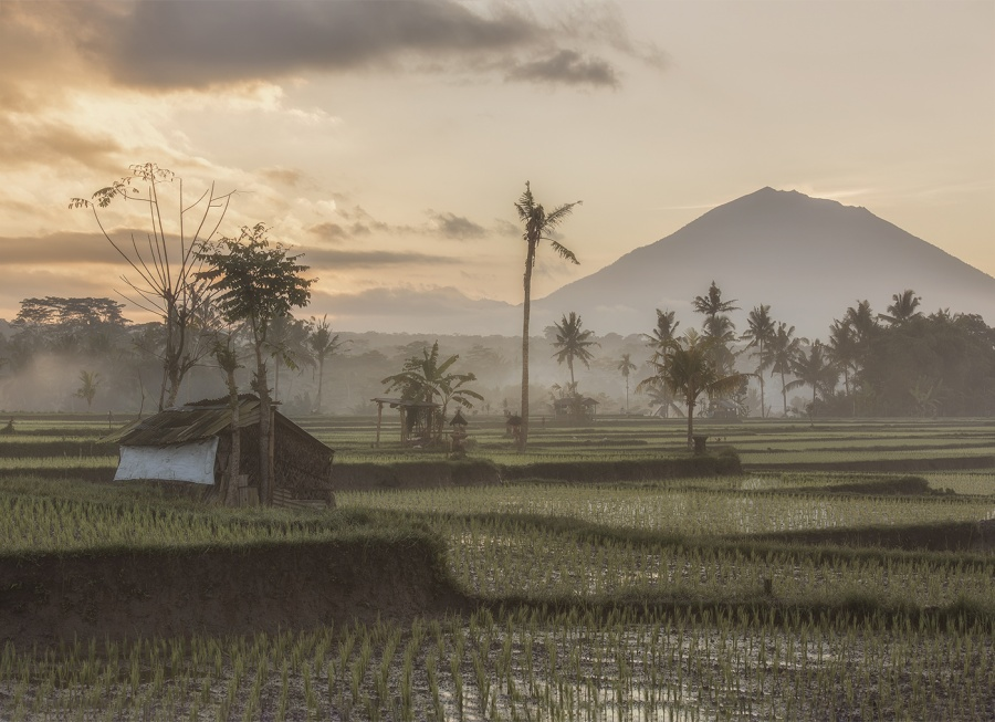 SUNRISE OVER THE PADI FIELDS, BALI by Charlotte Nuttall