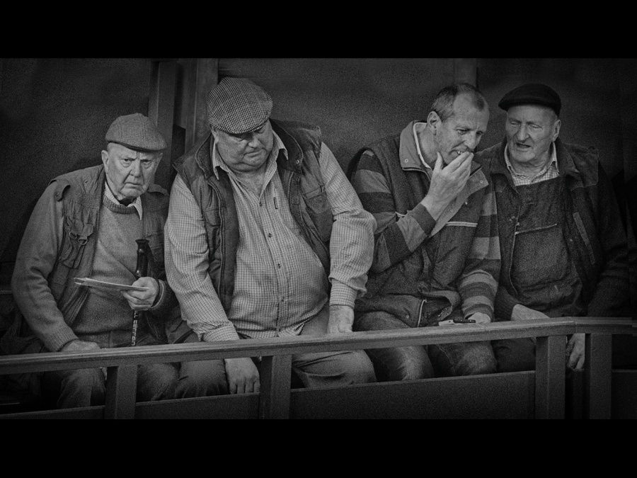 AT THE CATTLE AUCTION by Helena Jones