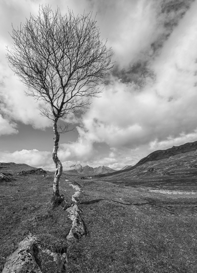 THE LONE TREE by James Street
