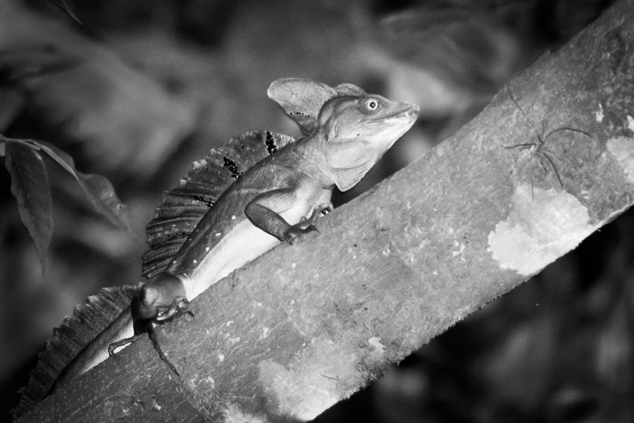 NIGHTLIFE IN A TROPICAL RAINFOREST 1 by Dorothy Challand