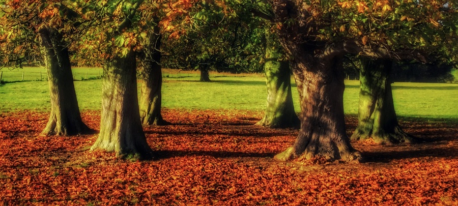 THE CHESTNUT RING By Brian Bristol 45A