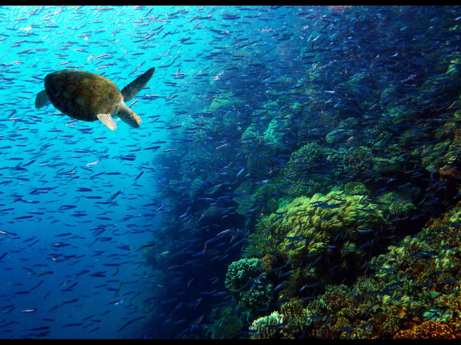 CRUISING THE REEF  by Pip Collett