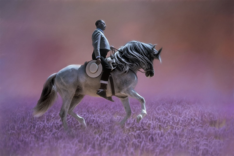 Purple Neighs by Rodger Holden