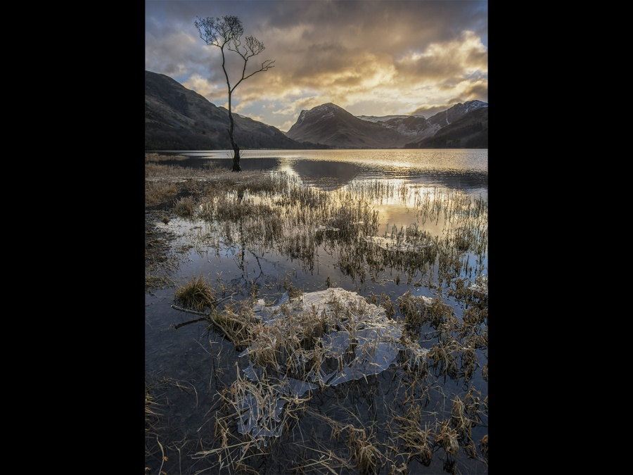 THE LONE TREE AT BUTTERMERE by Charlotte Nuttall