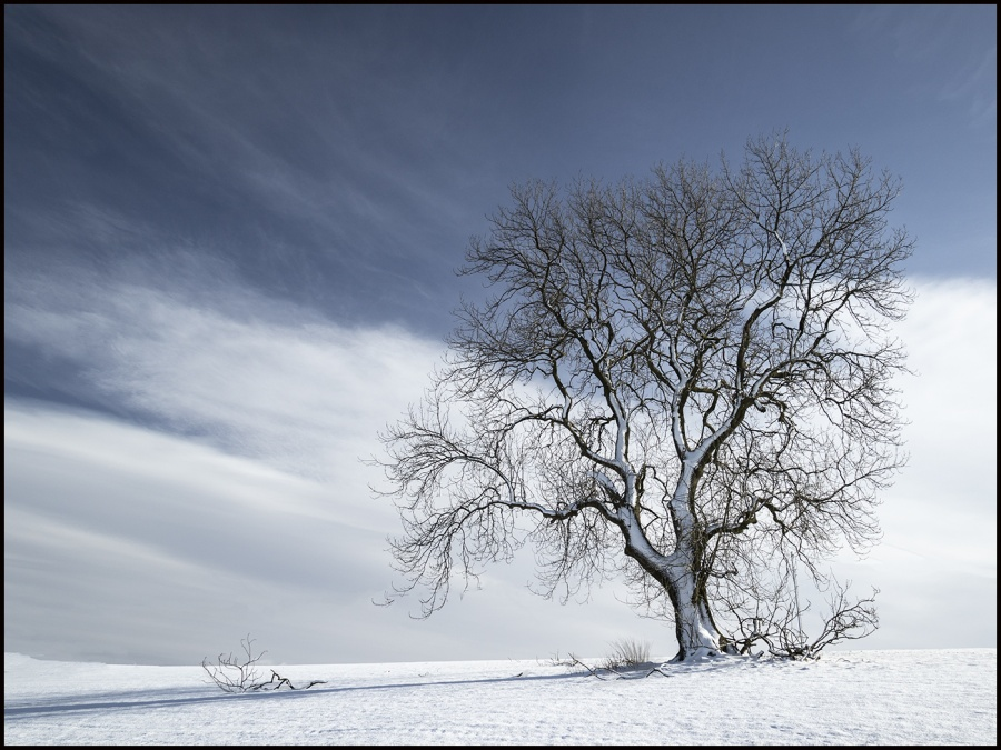 DRIFTING SNOW by Annette Thomas